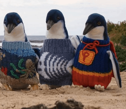 The Oldest Man In Australia Knits Tiny Sweaters for Penguins